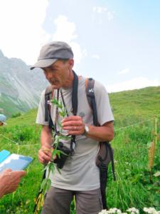 Epilobium alpestre ; Épilobe des Alpes, Épilobe alpestre ; Stage FMBDS, Montaimont et cirque du Génépy, le 30 juin 2018, ©Photo Marie France Muraz