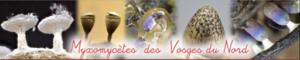 Site Internet sur les Myxomycètes des Vosges du Nord de Bernard WOERLY