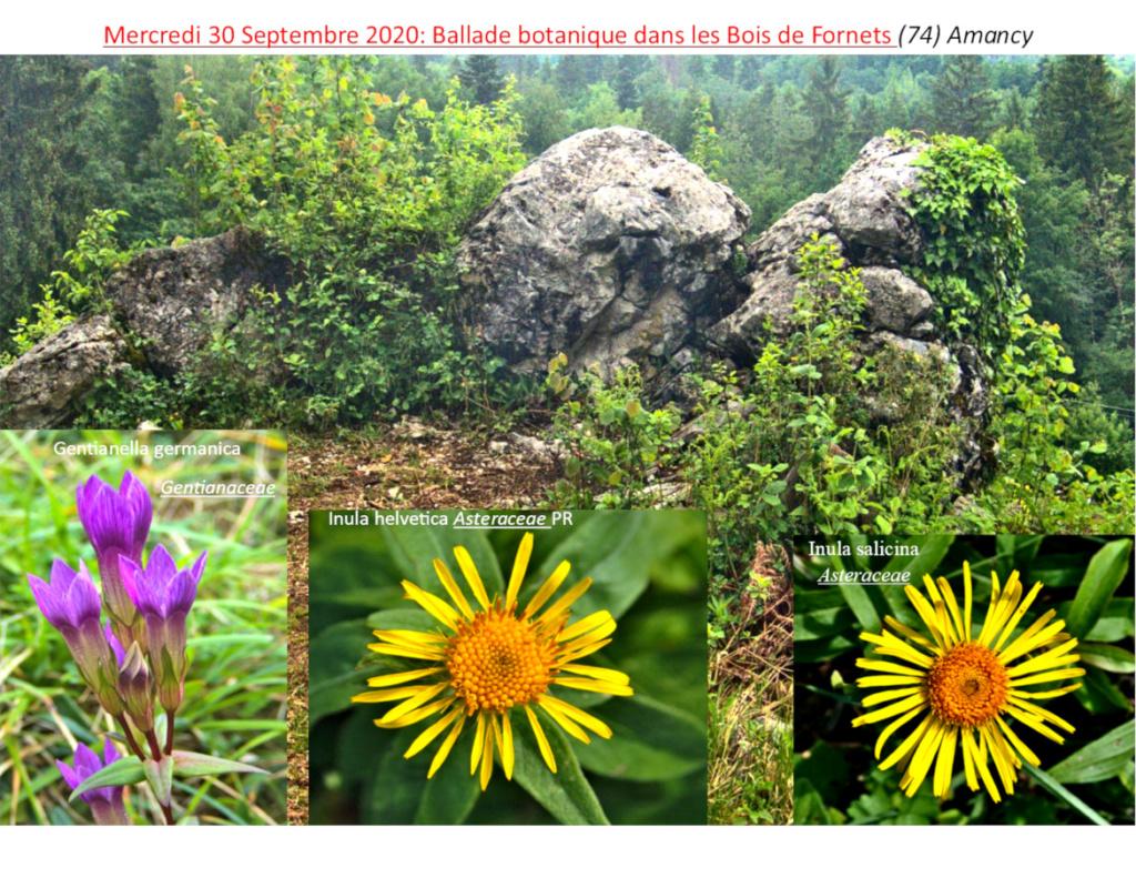 Ballade botanique dans les Bois de Fournets, ©Olivier Chabanon