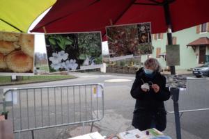 Stand au Marché de Noël de Saint-Laurent (74), photos Puiguicula grandiflora subsp. rosea et Drosera longifolia avec une Homo sapiens qui se bat avec la buée sur ses lunettes à cause du foutu masque, 16 décembre 2020